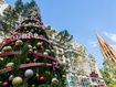 Premier confident for a COVID-19 normal Christmas