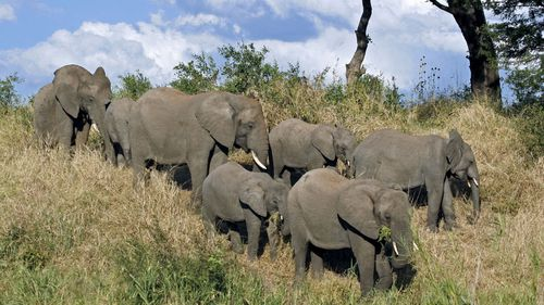 The poacher was killed by an elephant in the Kruger National Park.