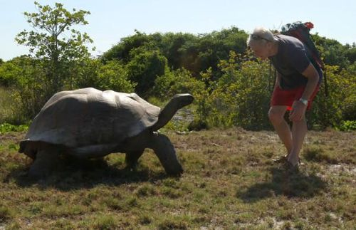 A giant Aldabra tortoise in pursuit of explorer Paul Rose. (source: National Geographic)