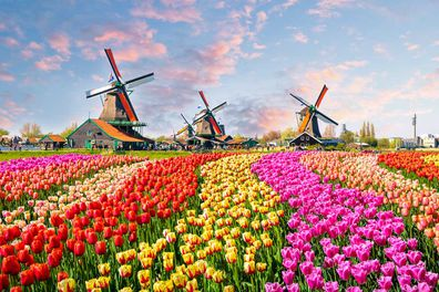 7.Amsterdam, Netherlands $176