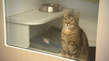 Hundreds of stray cats and kittens need a new home this Christmas