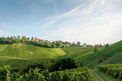 15. Weingut Tement, Austria