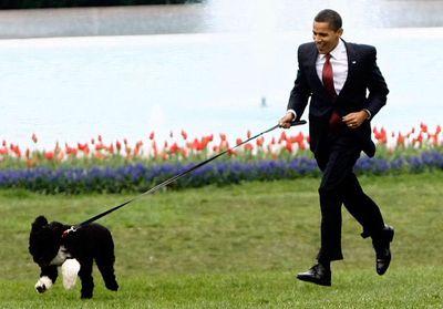 Barack Obama: Bo