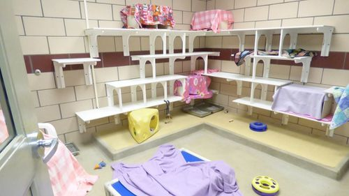 The vacant cat playpen. (Facebook / Fort Wayne Animal Care and Control)