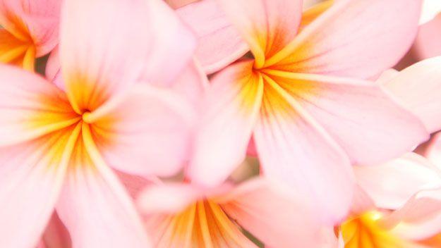 Festive flora: December gardening tips