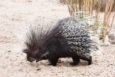 <strong>Porcupines are all about consent</strong>