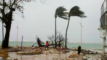 People walk by a fallen tree off the shore of Sainte-Anne on the French Caribbean island of Guadeloupe. (AP)