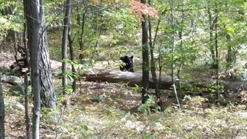 Darsh Patel took this mobile phone photo of the bear who killed him.