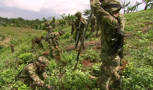 Troops hack into the two metre high plants with brush cutters and then pile them onto a bonfire. (9NEWS)