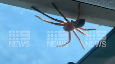 Sean Hancock said the huntsman inside the plane's cockpit capped a perfect day in the NT.