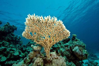 <strong>Sudan: Sanganeb Marine National Park and Dungonab Bay</strong>