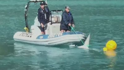 Conservationists demand re-think on shark cull