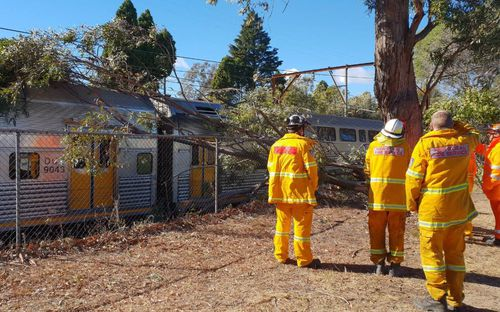 Emergency crews worked to remove the fallen tree from overhead wires.