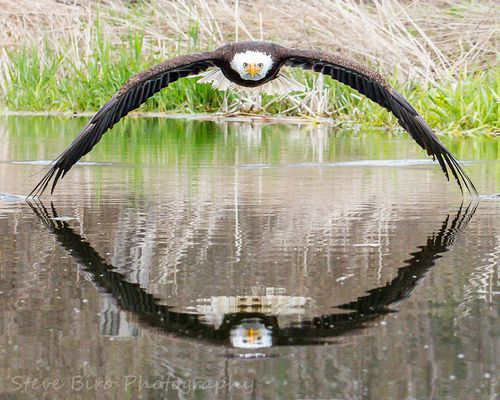 How photographer captured stunning bald eagle image