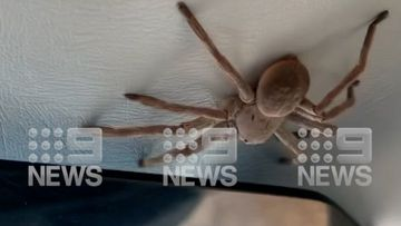 The huntsman crawled out in the Cessna plane as it came in to land after a scenic flight over Kakadu.