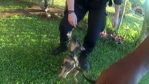"""Officers stated that the dog was """"clearly scared"""" and """"traumatised"""" by the owner's actions."""