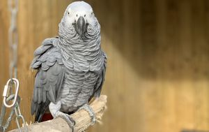 Potty-mouthed parrots removed from wildlife park after swearing at visitors
