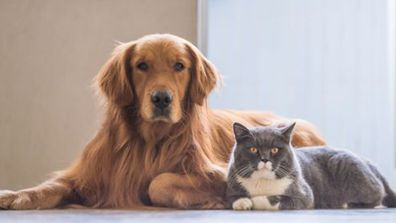 Apartment living with pets: The buyers willing to pay a premium for their animals