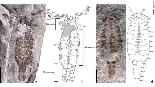 New species of prehistoric scorpion 'may have been early land explorer'