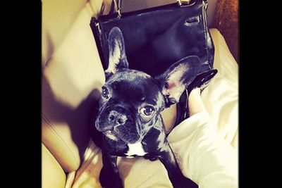 When this pampered pooch travels, it's luxury all the way.