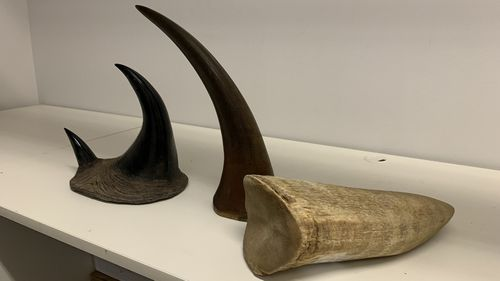 Tusks and horns.