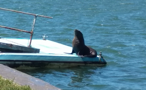 The seal was just five metres from the home. (Supplied)