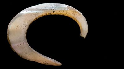 The hook was probably exposed and brought to the surface by people climbing over the ancient midden. (9NEWS)