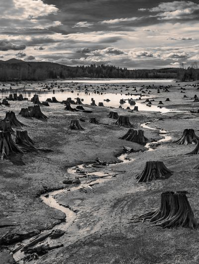 Stumps, Alder Lake, Nisqually River, Washington