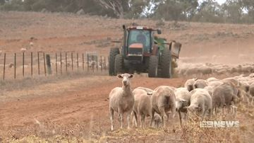 businesses struggling to stay afloat as crippling drought has knock on effects