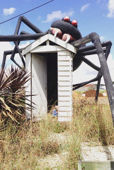 <strong>Eight Mile Plains, Australia: Giant Redback Spider</strong>