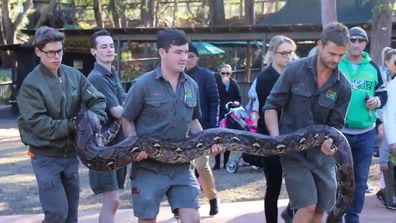 Nicki Minaj is huge, but Monster takes the cake as the biggest snake at Australia Reptile Park