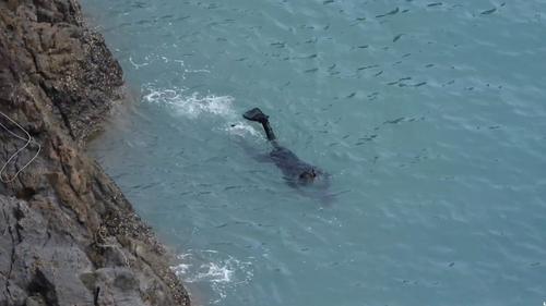 A fisherman was seen holding the animal underwater, where it began to weaken.