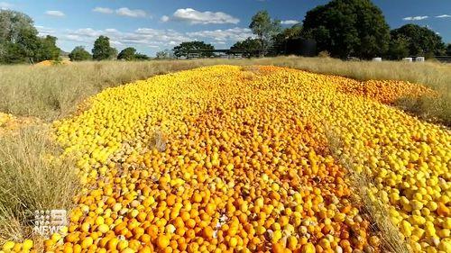Farmers dumping tonnes of citrus fruit due to labour shortages
