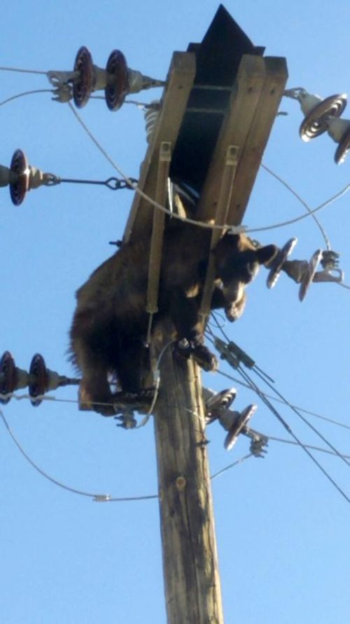 A bear in Arizona emerged unscathed from quite the power trip when it became stuck on a utility pole.