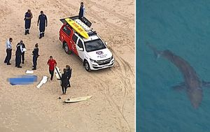 Man killed by Great White shark while surfing in northern NSW