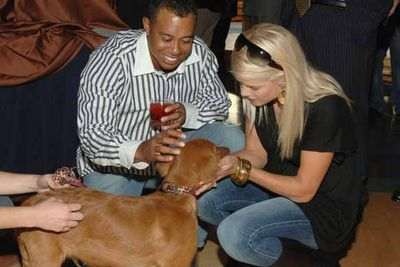 Elin Nordegren took possession of three of the couple's dogs after it was revealed Tiger Woods was a serial cheat back in 2009. During their divorce proceedings, they each fought for custody. Since then, they have both been spotted with the mix-breeds. Joint custody?