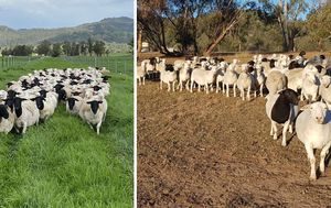 Has the drought finally broken for some Aussie farmers?