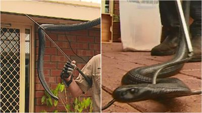 Snakes emerge as weather changes
