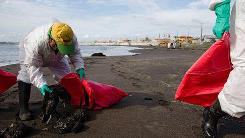 Mystery over 1,300 birds found dead on Chilean beach