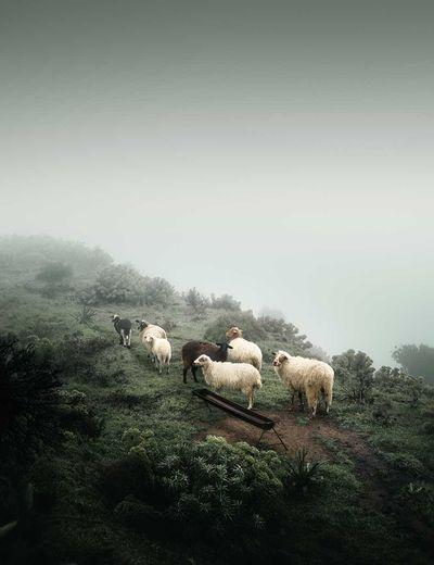 Foggy Farming, Greece (2021)