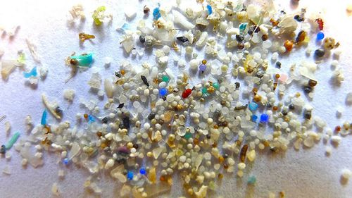 Fish eat toxin-laden microbeads: experts