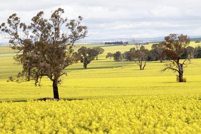 1. Wagga Wagga, NSW