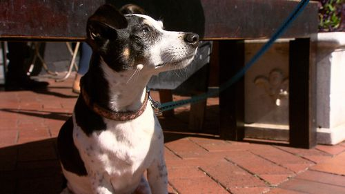 Jake the Jack Russell has been reunited with his owners after being snatched from a supermarket.
