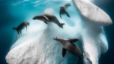 Winner and Underwater Photographer of the Year 2020