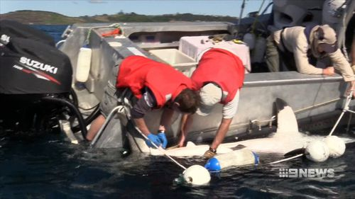 The Fisheries Minister says there's not enough evidence that smart drum lines work. (9NEWS)