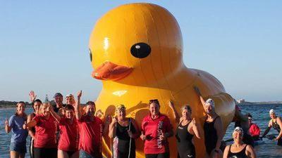 Daphne the giant inflatable duck found after blowing away