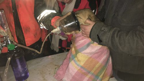 The dog was provided with oxygen after being rescued. (Beykoz Fire Department)