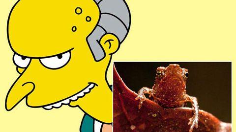 """""""Mr Burns toad"""" deemed one of 2010's weirdest animals"""