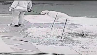Man catches dog poo drop culprits