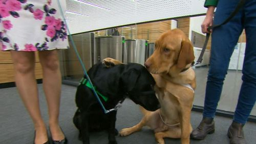 Dogs are lending a paw to victims of crime. (9NEWS)